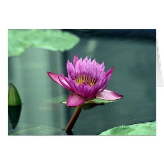 Hot Pink Water Lily Blank Card card