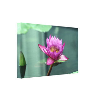 Hot Pink Water Lily Canvas Print