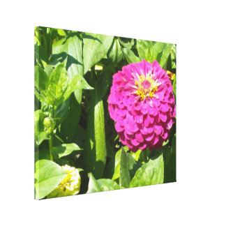 Hot Pink Zinnia Canvas Print