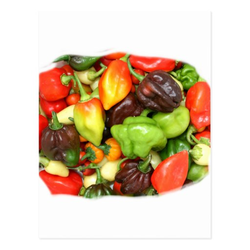 Hot Spicy Peppers Different Species, Spice it up! Postcard