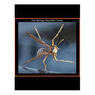 Hot Springs Mountain Wasp Gift & Aparel Postcard