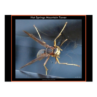 Hot Springs Mountain Wasp Gift & Aparel Postcards