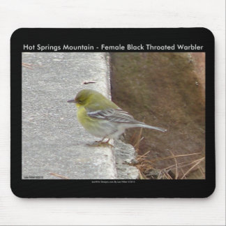 Hot Springs Mt Female Black Throated Warbler Gifts Mouse Pad