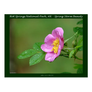 Hot Springs National Park, AR  Wild Rose Gifts Post Card