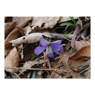 Hot Springs National Park Wildflower by Lee Hiller Poster
