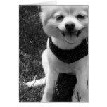 Hot Summer Doggy Days Card