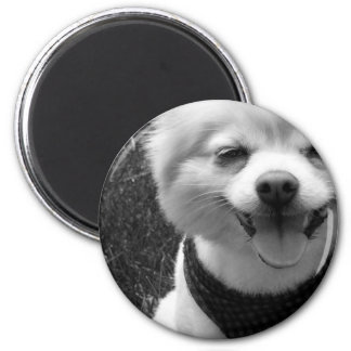 Hot Summer Doggy Days 2 Inch Round Magnet