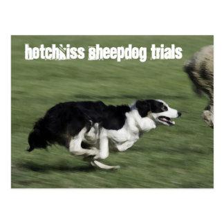 Hotchkiss Sheepdog Trials Postcard