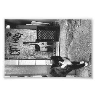 Hotel del gato fotografía