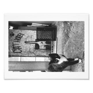 Hotel del gato fotografías