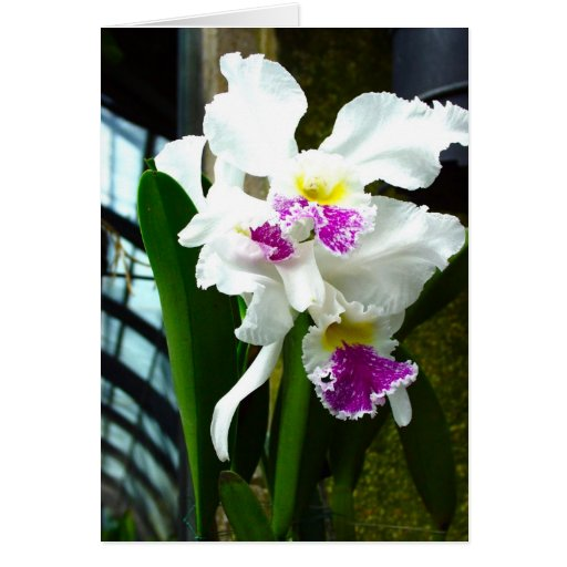 Hothouse Orchid Greeting Card