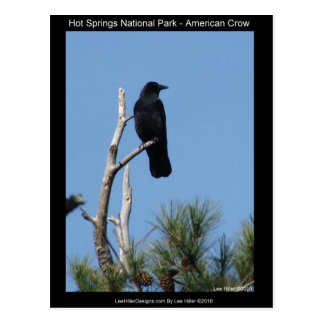 Hots Springs National Park, AR - American Crow Postcard