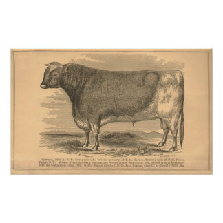 Hotspur, First Prize Bull at Utica, 1863 Poster