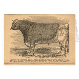 Hotspur, primer premio Bull en Utica, 1863 Tarjeta De Felicitación