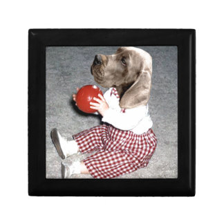 hound Ball Play Gift Box