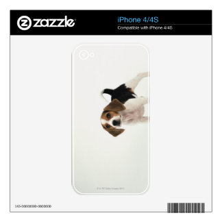 Hound Dog Decal For iPhone 4