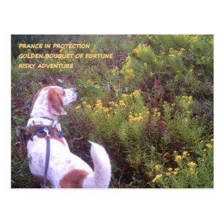 Hound Dog Goldenrod Bouquet Postcard