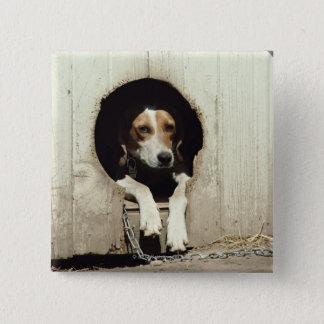 Hound dog in dog house button
