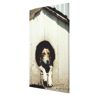 Hound dog in dog house canvas print