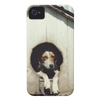 Hound dog in dog house iPhone 4 cover