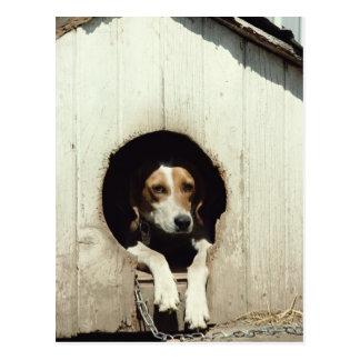 Hound dog in dog house postcard