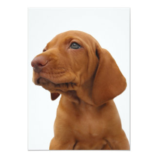 Hound Dog Invitation