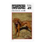 Hound Dog Postage Stamp