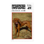 Hound Dog Postage Stamps