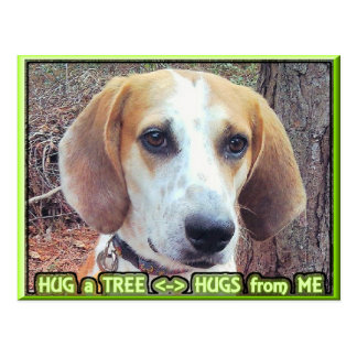 Hound Dog Tree Hugger Postcard