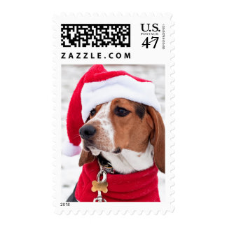 Hound dog wearing a winter coat and a Christmas Postage Stamp