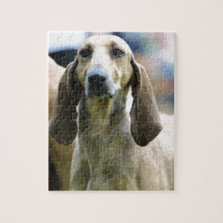 hound Italian short-haired Jigsaw Puzzle