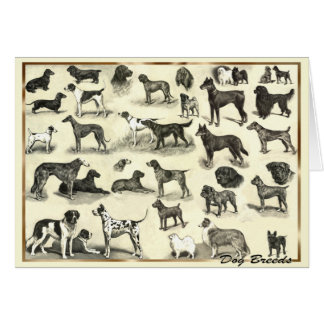 Hounds - Dog Breeds for Dog lovers canine hound Card