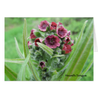Hound's Tongue Stationery Note Card