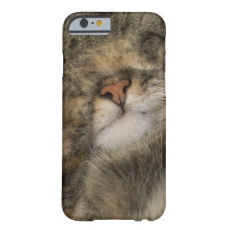 House cat covering eyes while sleeping barely there iPhone 6 case
