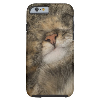 House cat covering eyes while sleeping tough iPhone 6 case
