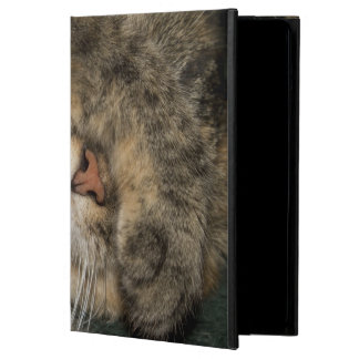 House cat covering eyes while sleeping cover for iPad air