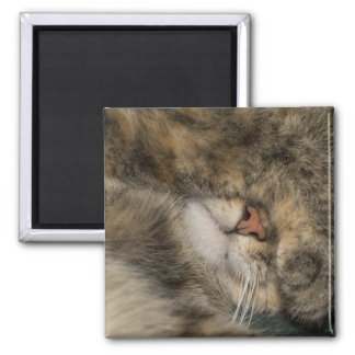 House cat covering eyes while sleeping magnet