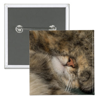 House cat covering eyes while sleeping pinback button