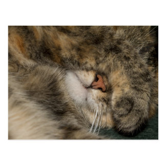 House cat covering eyes while sleeping postcard