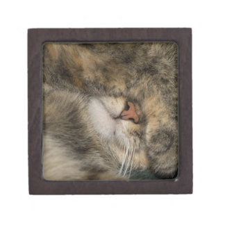 House cat covering eyes while sleeping premium gift boxes