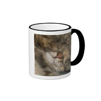 House cat covering eyes while sleeping ringer mug