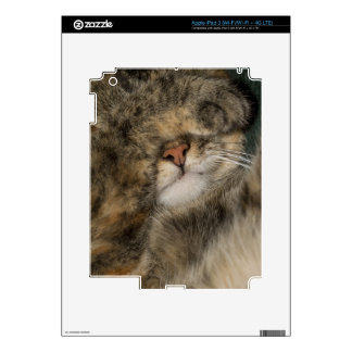 House cat covering eyes while sleeping iPad 3 decal