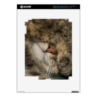 House cat covering eyes while sleeping iPad 3 skins