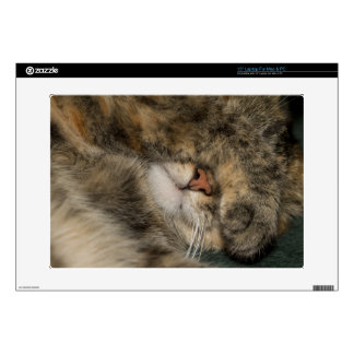 House cat covering eyes while sleeping skins for laptops