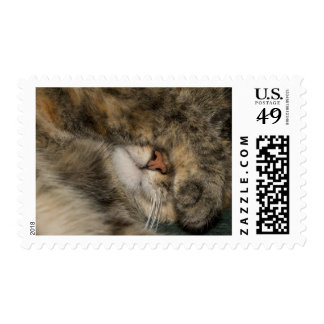 House cat covering eyes while sleeping stamp