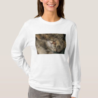 House cat covering eyes while sleeping T-Shirt