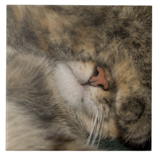 House cat covering eyes while sleeping tile
