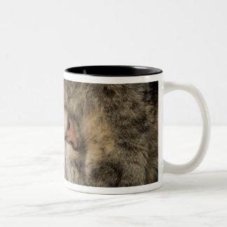 House cat covering eyes while sleeping Two-Tone coffee mug