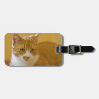 House cat luggage tag