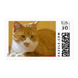 House cat postage